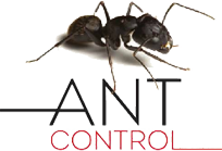 gel treatment ants