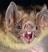 bat in dubai