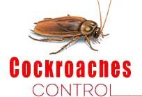 gel treatment Cockroaches